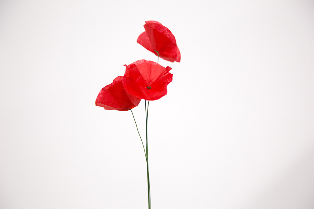 Diy paper poppies miliboo blog uk coquelicot11 mightylinksfo