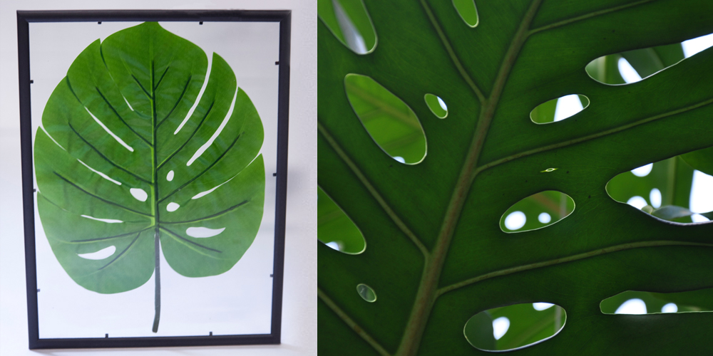Diy plant picture frame urban jungle d cor miliboo blog uk for Decoration urban jungle